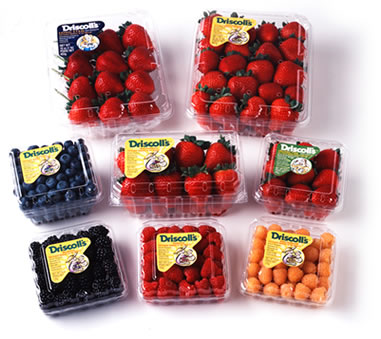 0 50 1 driscoll s berries printable coupon   money saving