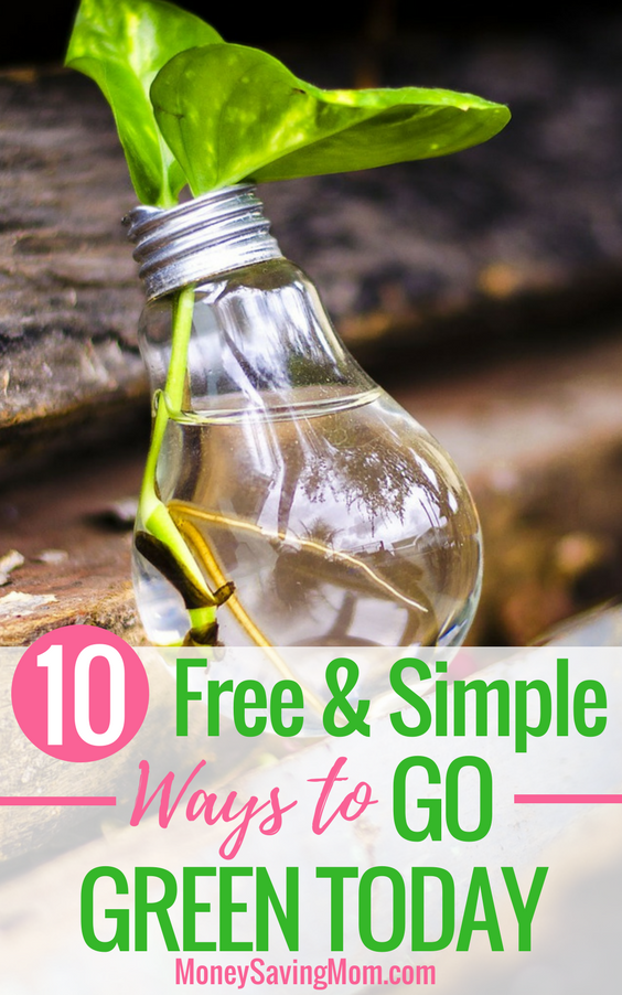Looking for easy ways to go green? Check out these 10 tips that are completely FREE!