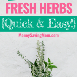 Freeze fresh herbs with this quick and easy method!! They'll never go to waste again!