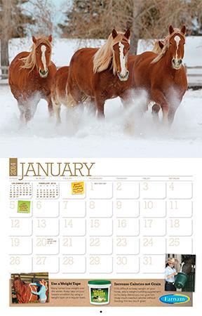 Free 2014 Horse Care Calendar