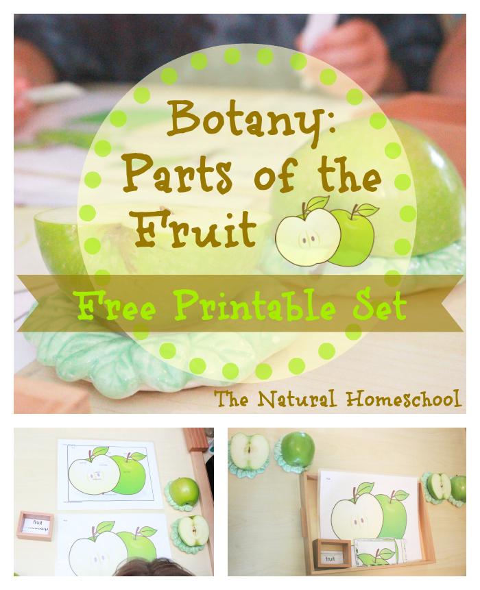 Free parts of fruit printable pack