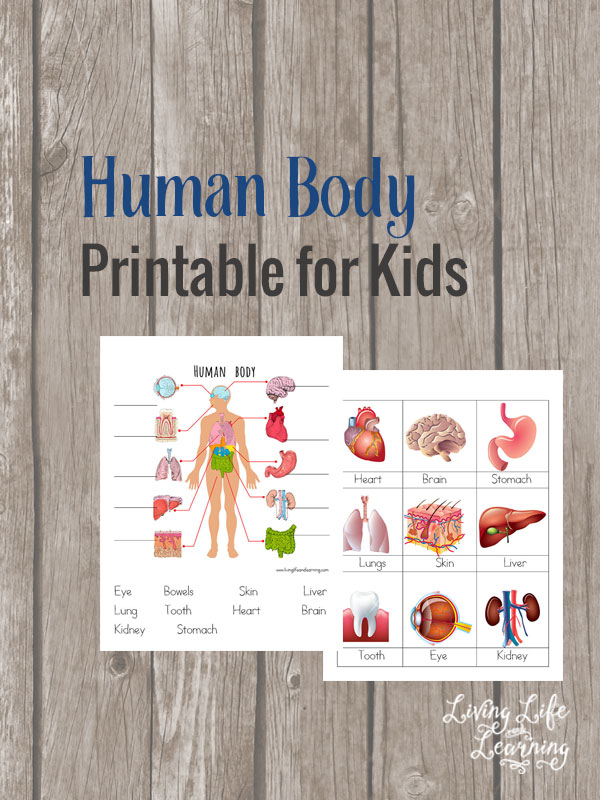 Free Human Body Printable For Kids on Digestive System Worksheet First Grade
