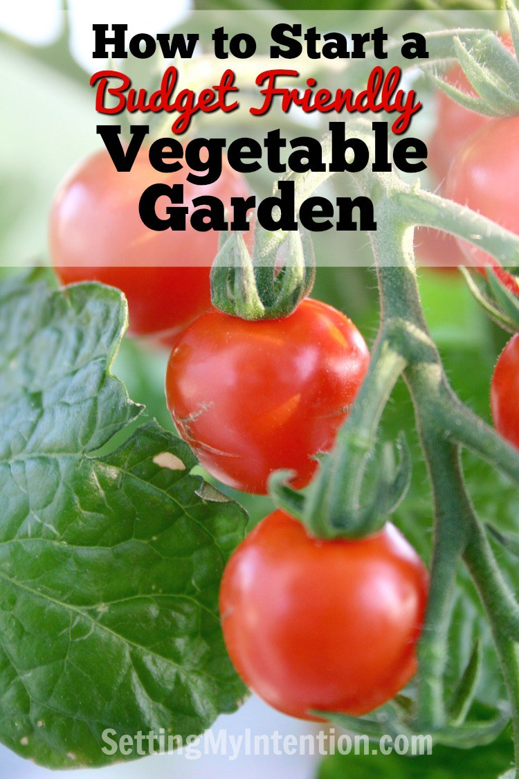 How to Start a Budget-Friendly Vegetable Garden