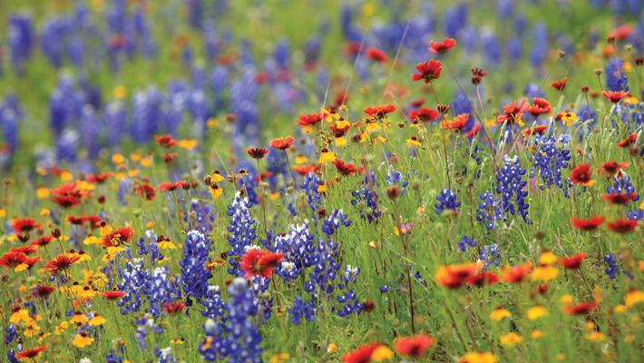 Free Plantable Wildflower Seed Paper Free Packet Of Wildflower