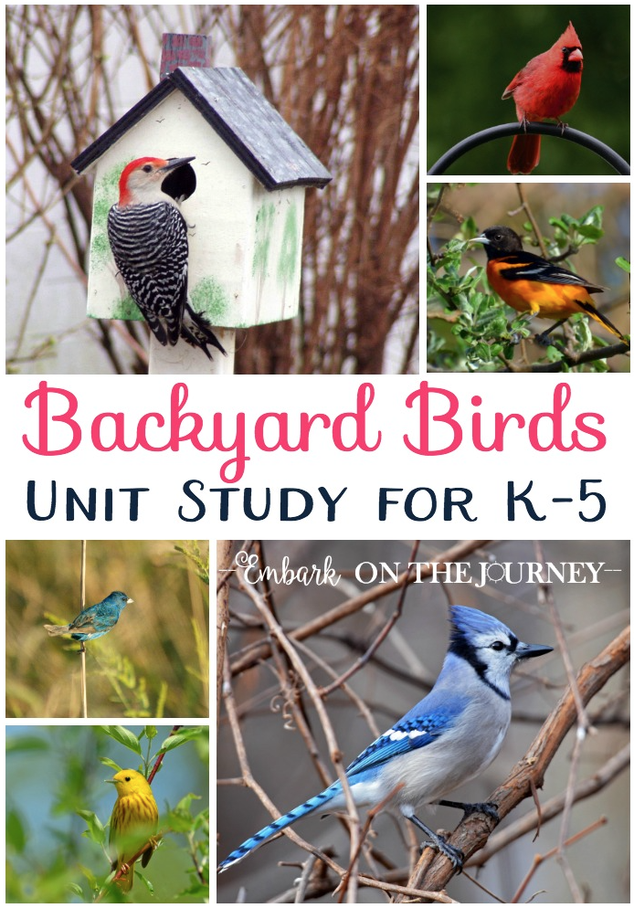 Download a free printable Backyard Birds unit study.