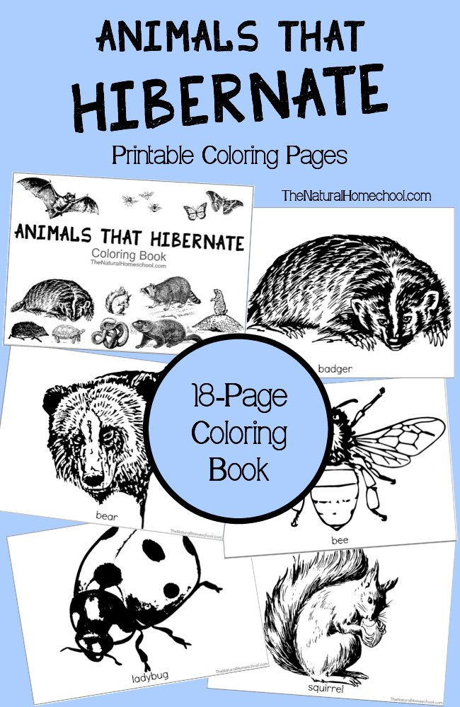 Free Printable Animals That Hibernate in Winter Coloring Book ...