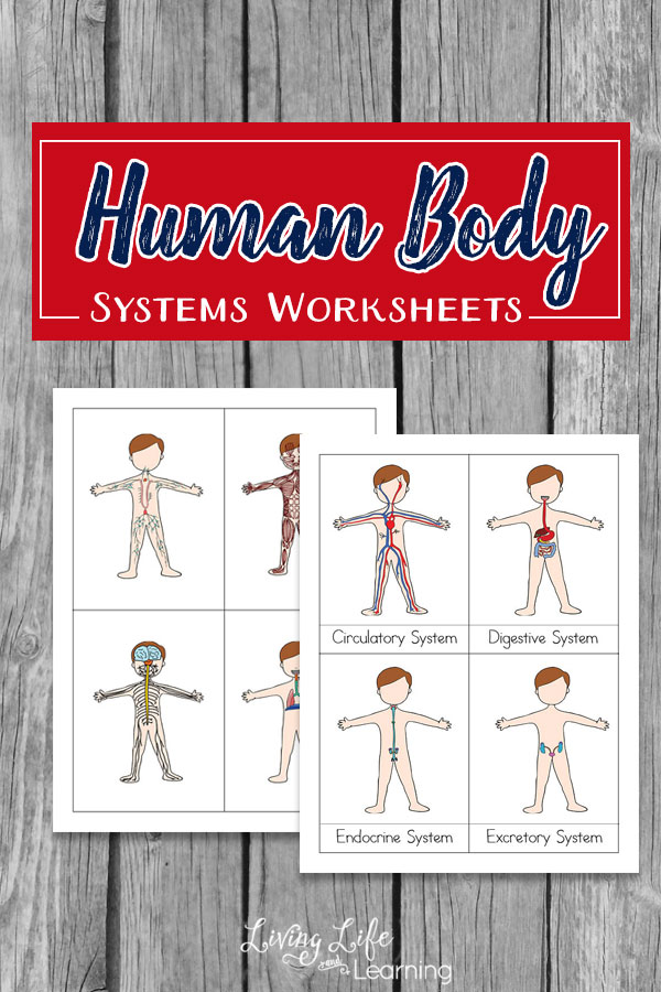 Free Printable Human Body Systems Worksheets for Kids - Money Saving ...