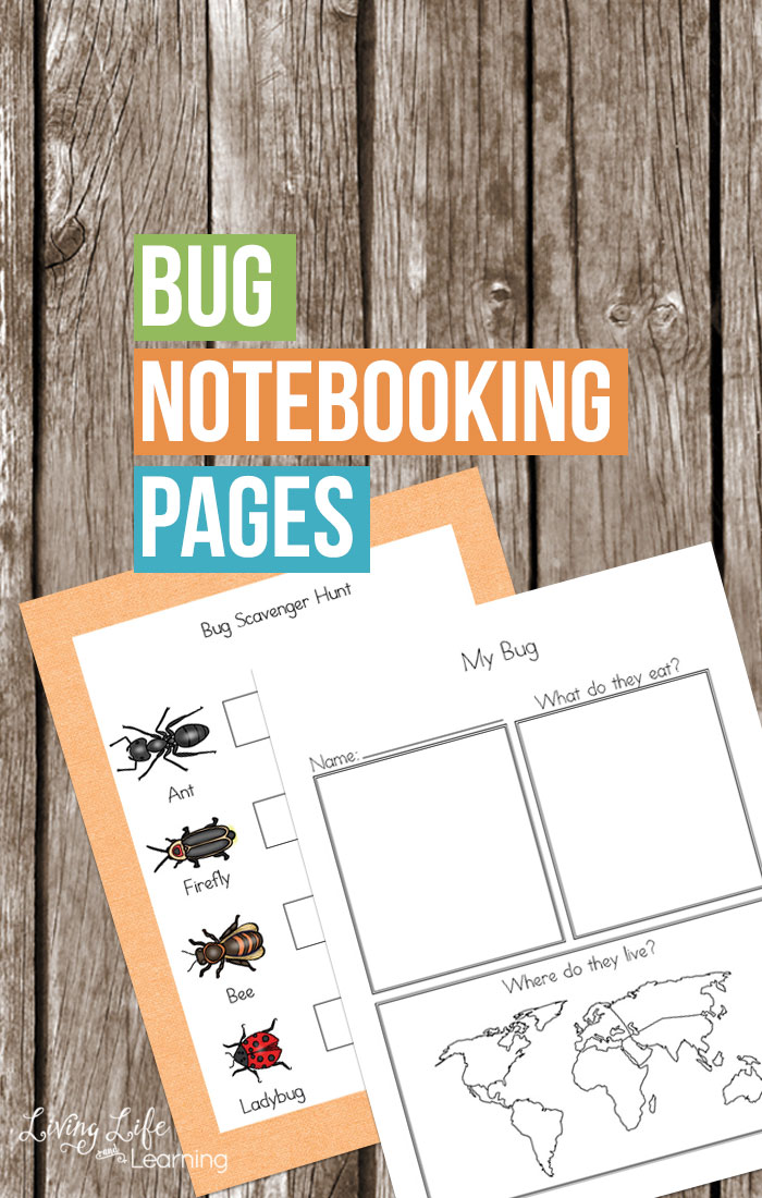 Free Printable Bug Notebooking Pages