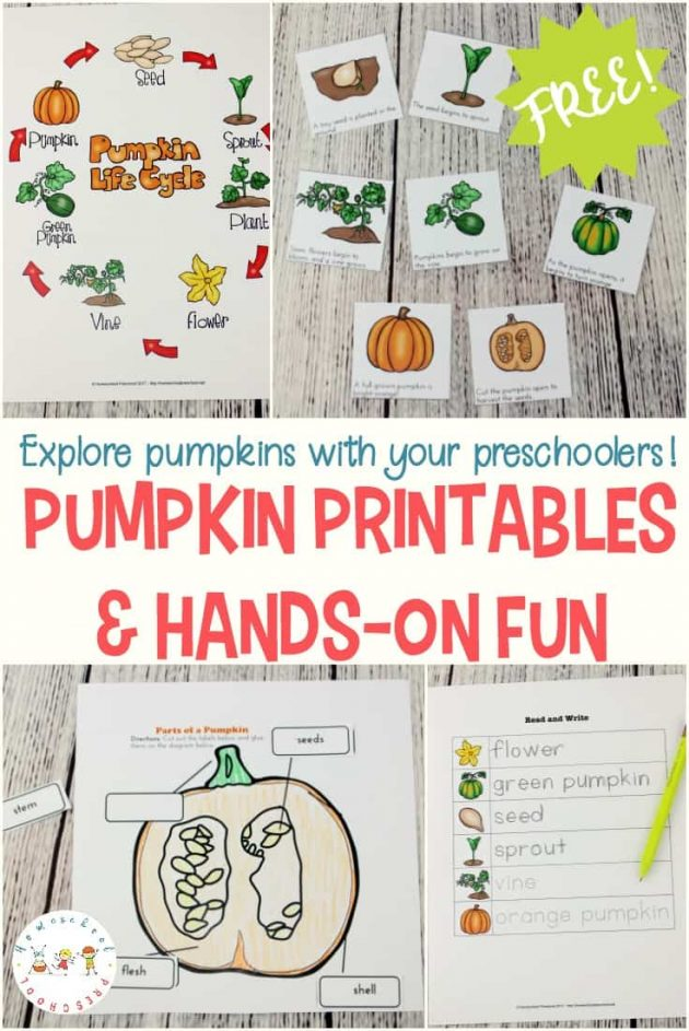 Free Life Cycle of a Pumpkin Preschool Printable Pack