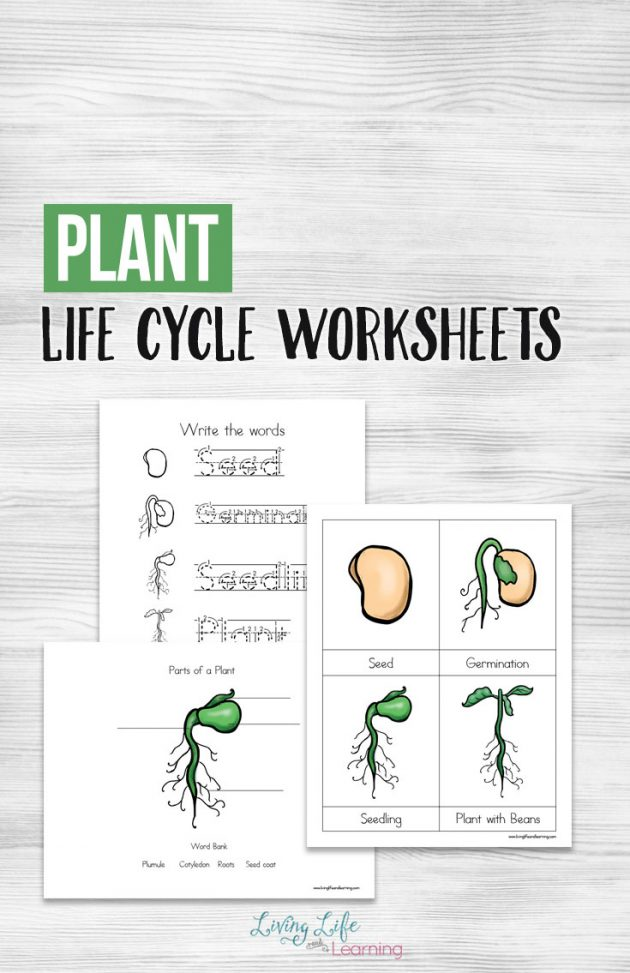 image regarding Plant Life Cycle Printable titled Cost-free Printable Plant Everyday living Cycle Worksheets Economical Conserving