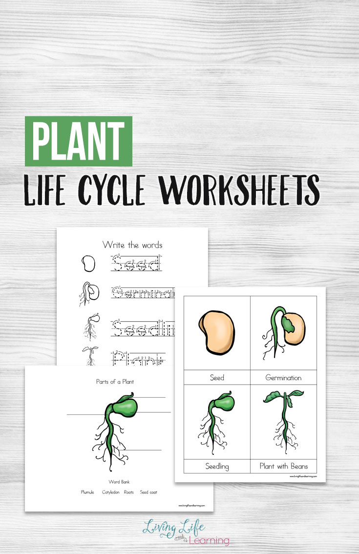 Free Printable Plant Life Cycle Worksheets Money Saving