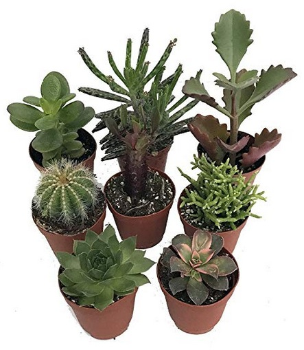 Succulent Collection