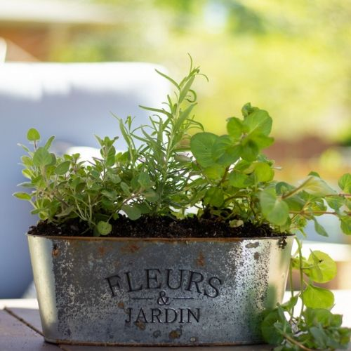 growing your own herbs in a planter