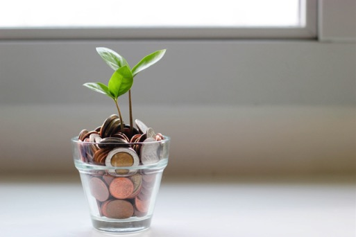 Money in a Pot with Growing Tree