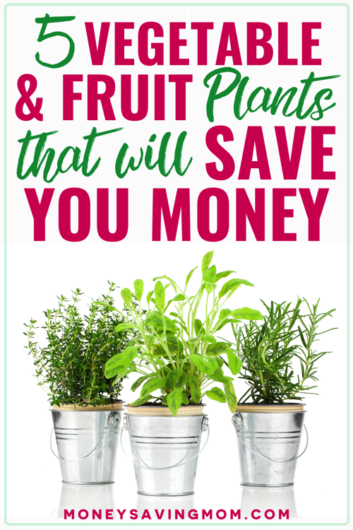 growing your own vegetables to save money