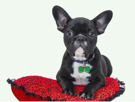 FREE Pet Fetch Smart ID Tag