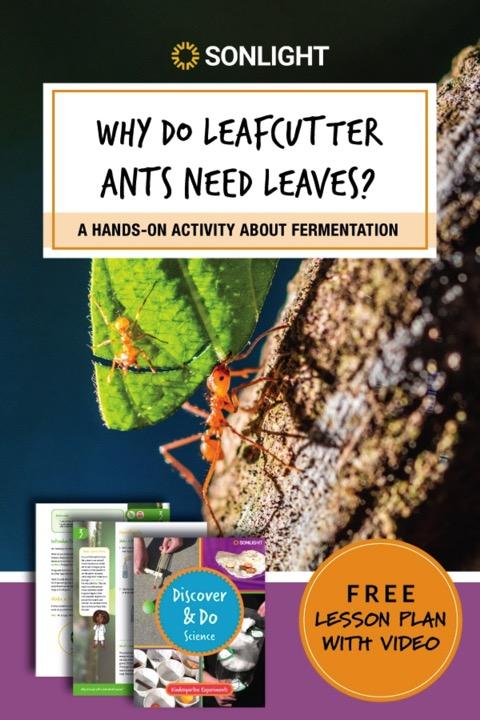 free leafcutter ants homeschool curriculum