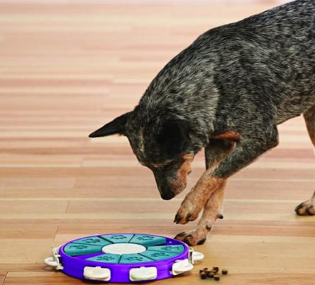 Dog Treat Puzzle Toy