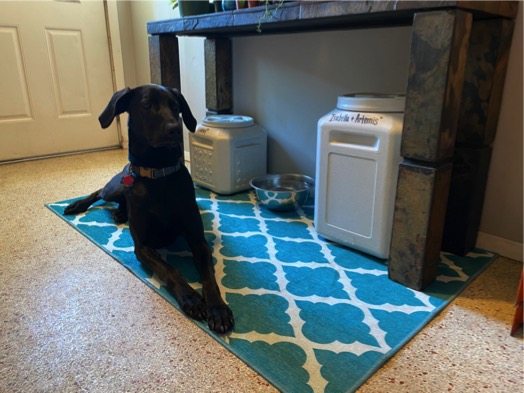 My Magic Carpet Dog Room