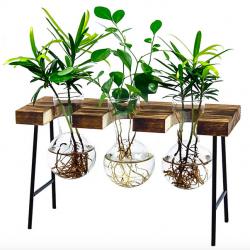 Desktop Glass Planter Vase with Wooden Stand