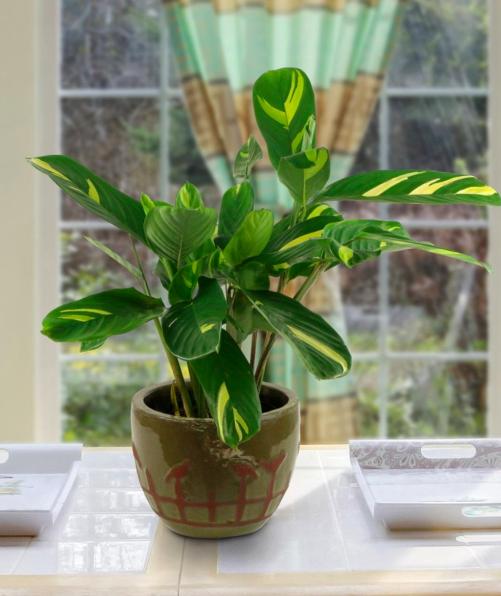 Immense Merchantability On Indoor Houseplants!